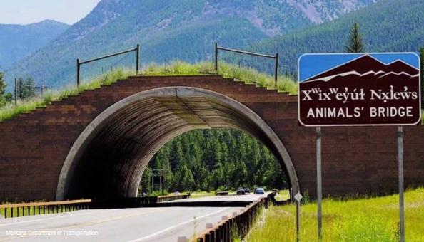 animals-bridge_montana-dept-of-transportation-road-safety